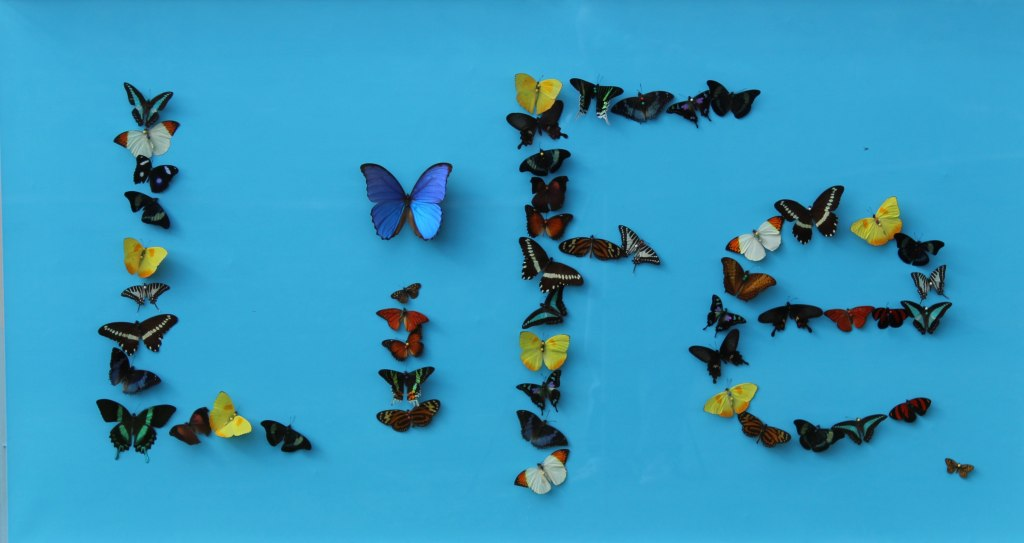 still-life-butterfly-wall-sculpture-anthony-moman